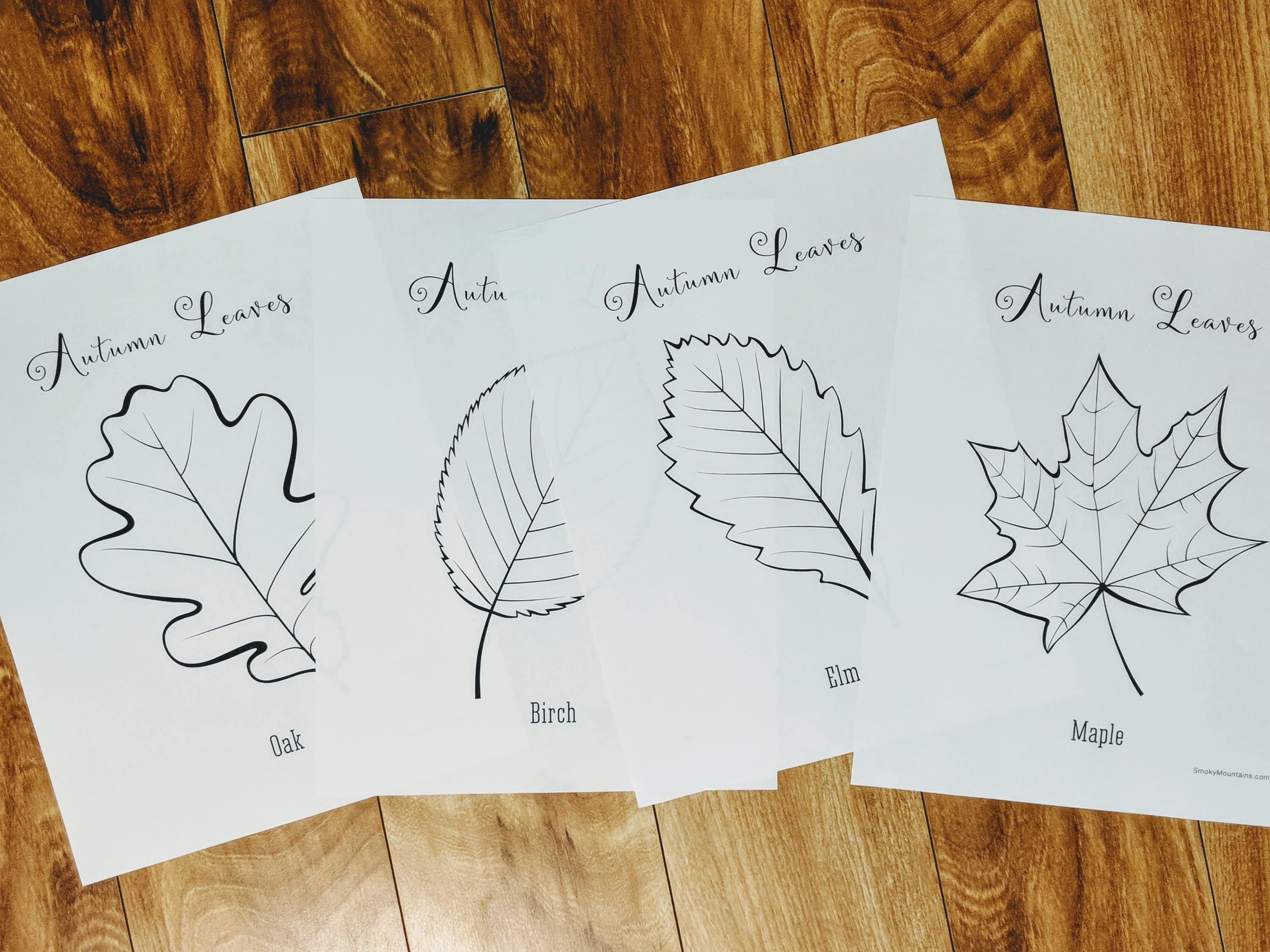 lessons about autumn