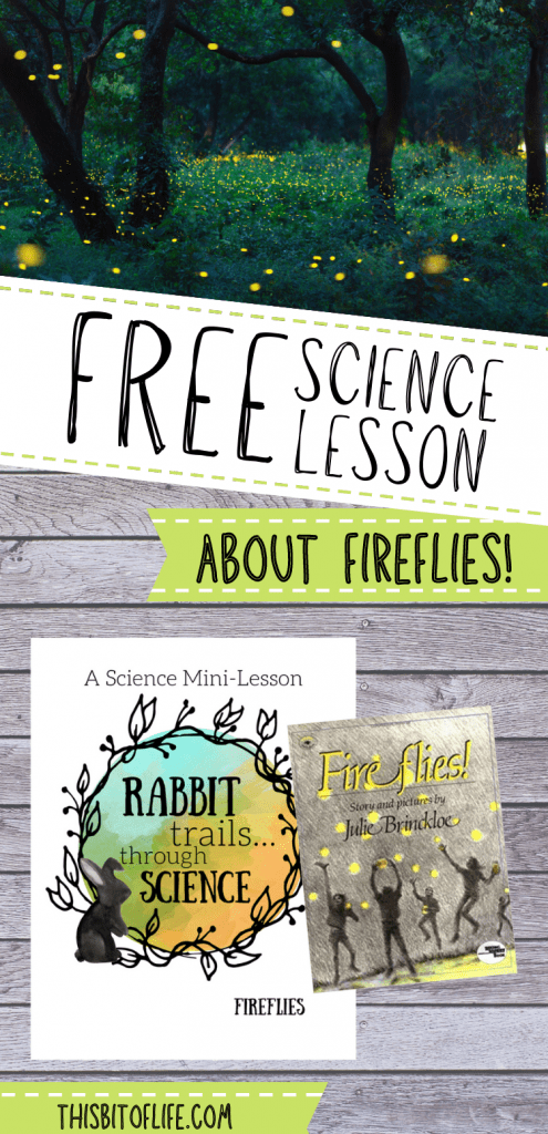 Free science lesson about fireflies! Learn about fireflies in this free literature based nature study from Rabbit Trails thorugh Science. Literture based learning for your homeschool science. Free nature study about lightning bugs. Homeschool freebie science lesson.